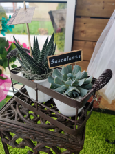 Metal Tray Succulents