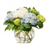 Mighty Hydrangea Floral Arrangement