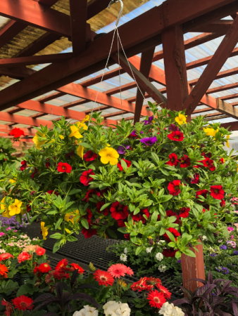 Million Bell Blooming Basket Outdoor