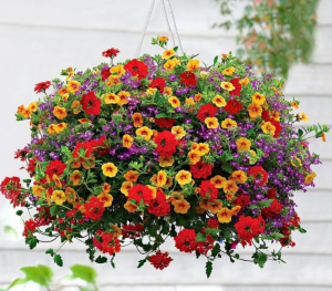 Million Bells Hanging Basket in Plum, PA | FOREVER GREENE FLOWERS INC.