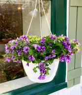 Million Bells Hanging Basket