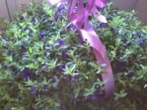 million bells hanging basket outdoor plant