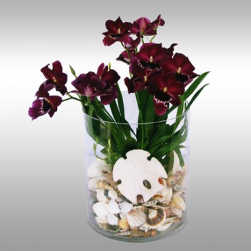Miltonia Orchid With Seashells