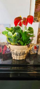 Mini Basket Planter