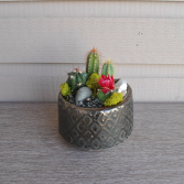 Mini Desert  Planter