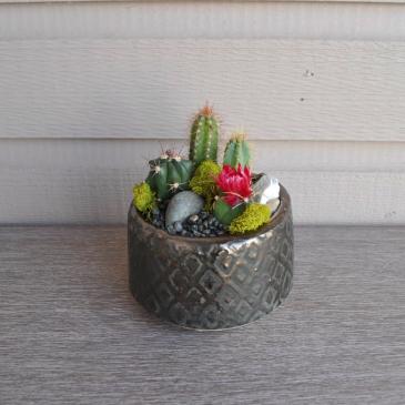 Mini Desert  Planter