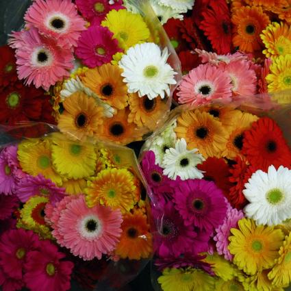 mini-Gerb Bouquet Gerbera