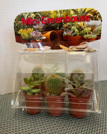 Mini Greenhouse Plants