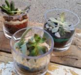 Mini Mixed Terrarium