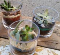 Mini Mixed Terrariums