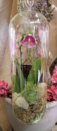 Mini Orchid in a  Glass Orb