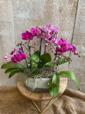 Special Mini Orchids Planter  6 stems of blooms