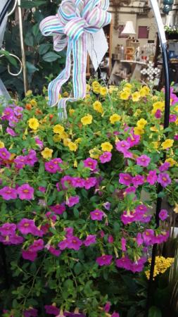 mini petunia hanging basket annual petunia basket