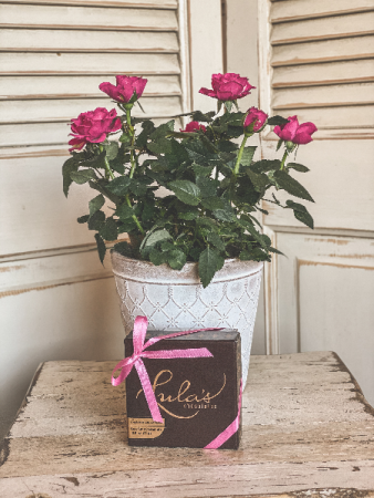 Mini Potted Rose w/ Lula's Chocoloates
