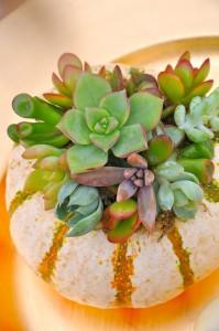 Mini Premium Pumpkin Succulents  in Wilton Manors, FL | LA FLEUR FLORALS & EVENTS
