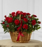 Mini Rose Basket Plant