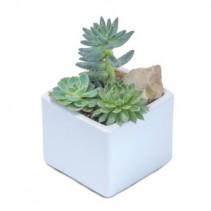 Mini Stunning Succulent Arrangement