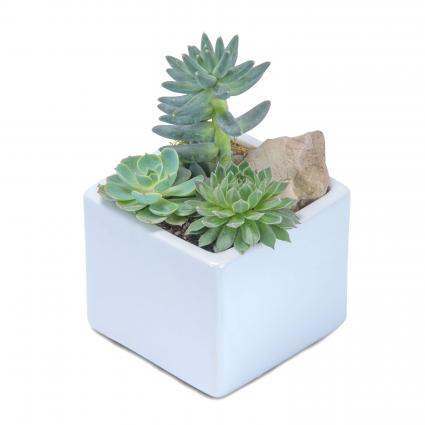 Mini Stunning Succulent Garden