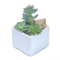 Mini Stunning Succulent Plant Arrangement