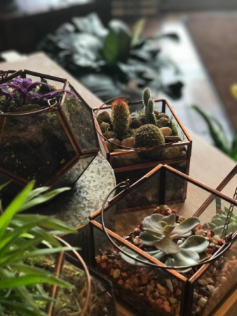 Mini Terrarium Farmhouse Collection