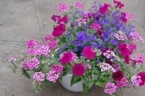 "Mix 10"" Outdoor Hanging Basket"