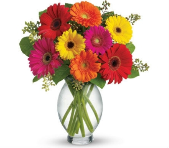Mix Gerbera Daisy Arrangement Fresh Arrangement