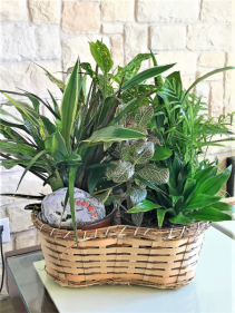 MIX OF GREEN PLANTS IN A PEANUT BASKET