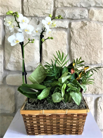 MIX OF GREEN PLANTS WITH BLOOMING ORCHID