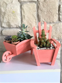 MIX OF SUCCULENTS AND CACTUS PLANT
