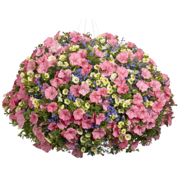 MIX PETUNIA  HANGING BASKET