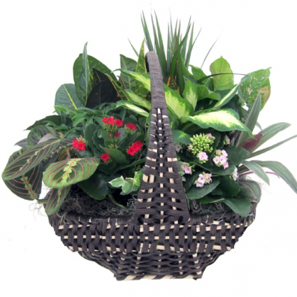 Mix Planter Plant