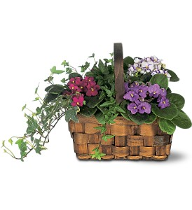 Mixed African Violet Basket by Teleflora  in Valley City, OH | HILL HAVEN FLORIST & GREENHOUSE
