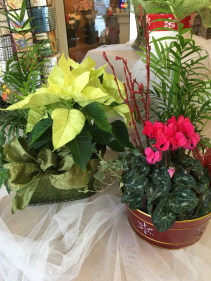 Mixed assortment of Christmas planters Planters