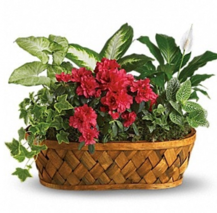 Mixed blooming plant basket Plant
