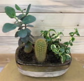 Mixed Cactus & Succulent Garden