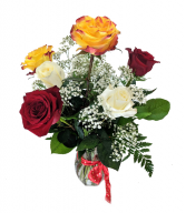 Mixed Color Half-Dozen Roses Flower Arrangment