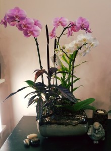 Mixed color Orchids arrangement Plants in Vancouver, BC | ARIA FLORIST