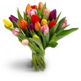 Mixed Colored Tulips  Wrapped Bouquet