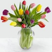 Mixed Colors Of Tulips