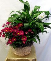 MIXED FLORAL BASKET Plants