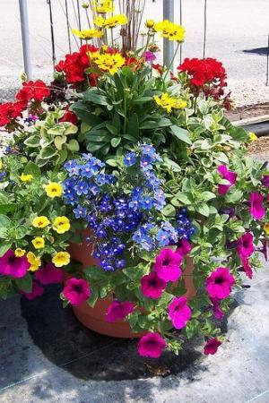 Mixed floral pot