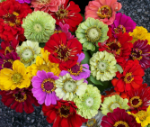 Mixed Flower Assortment Wedding & Event