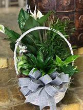 Mixed Garden Basket