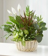 Mixed Garden of Green Plants