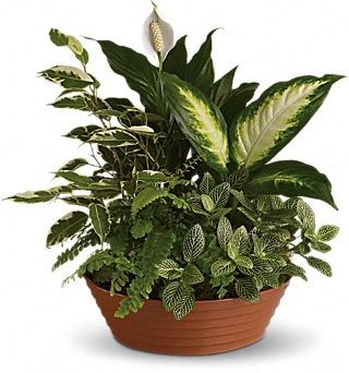 Mixed Green Plant Planter Everyday