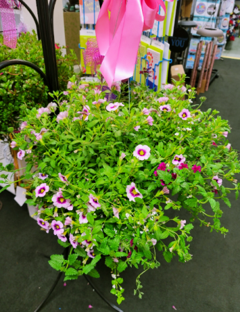 Mixed Hanging Basket Colors Will Vary