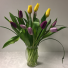 Mixed Holland Tulips Spring Surprise
