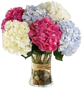 Mixed Hydrangea Bouquet In Bethesda Md Ariel Bethesda Florist