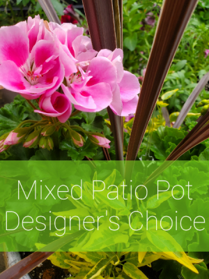 Mixed Patio Pot - Designer's Choice  in Valley City, OH   HILL HAVEN FLORIST & GREENHOUSE