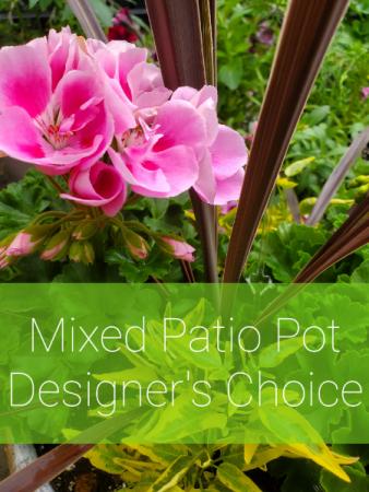 Mixed Patio Pot - Designer's Choice